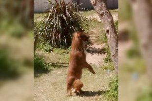 Cayastá: Denuncian a una mujer que fue filmada matando a un perro