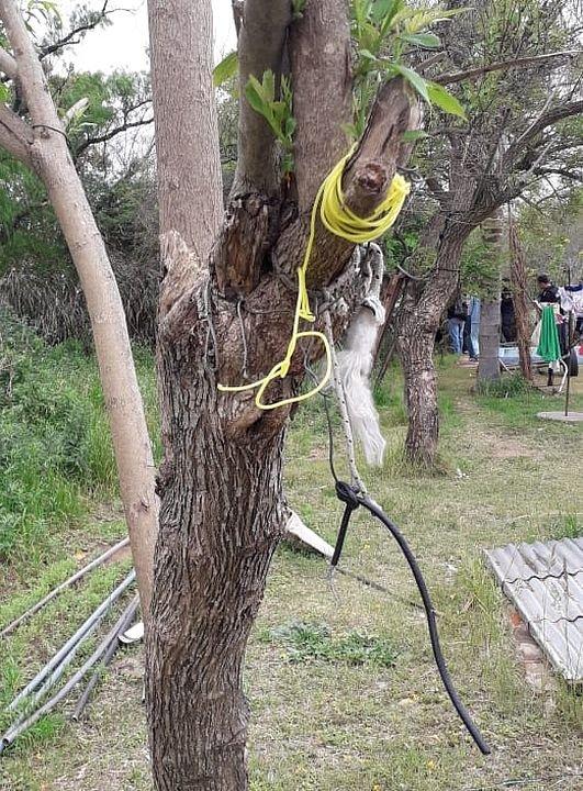 La tanza y el árbol que se habrían utilizado para matar al animal. <strong>Foto:</strong> Gentileza