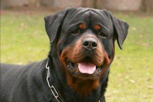 Un perro Rottweiler atacó a una niña que permanece en grave estado en el sur provincial
