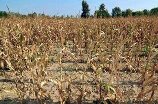 Por la sequía, declaran emergencia agropecuaria en La Pampa
