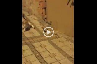 Video: Un ratón pasa de presa de un gato a cazador y se hace viral en las redes