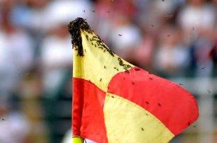 Invasión de avispas durante un partido en Brasil