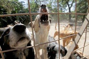 Un joven fue condenado a tareas comunitarias por maltratar a un perro