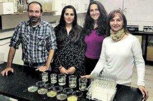 Salud vaginal: los avances logrados con los caparazones de crustáceos   - EL GRUPO DE TRABAJO que se abocó a la investigación y las expectativas que tienen sobre los avances del proyecto.