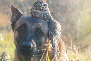 La amistad entre un perro y un búho que es furor en las redes sociales