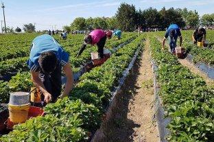 Calculan que el agro genera trabajo a 5,5 millones de personas