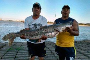 Pescaron un surubí gigante en la Laguna Setúbal