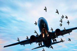 Video: graban cómo un pájaro se estrella contra el parabrisas de un avión en pleno vuelo