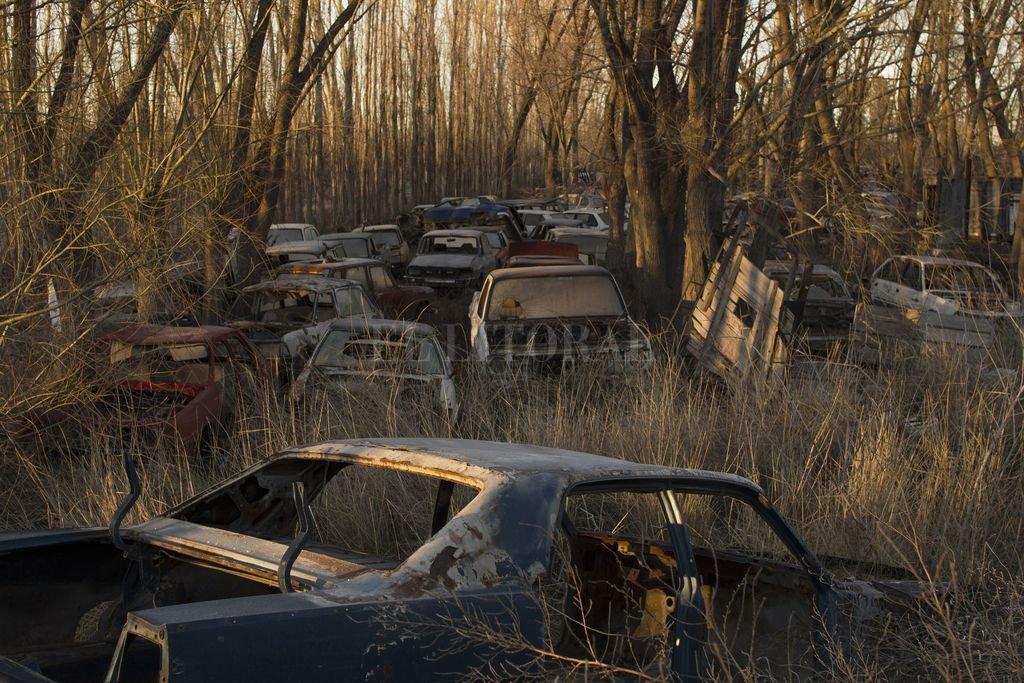 Un cementerio de vehículos automotores, parte del paisaje. Crédito: Gentileza Fotogalería