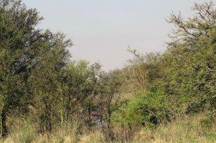 Evitaron el desmonte de bosque nativo en Santa Fe