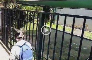 Viral: El pájaro que ataca a estudiantes de la UNLaM