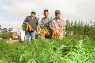 La zanahoria cierra un nuevo ciclo