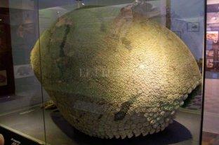 El Museo Pedroniano trabaja en el proyecto Dinosaurio -  -