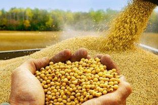 La calidad de la soja, imprescindible objetivo nacional