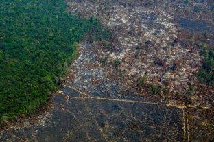 El Amazonas sufrió el último año la mayor deforestación de la década -  -