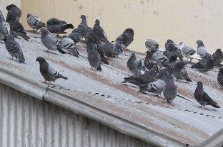 Padres dejaron de enviar a sus hijos a un colegio por invasión de palomas