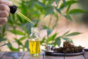 Ordenan a las obras sociales cubrir los costos del aceite de cannabis en 12 casos -  -