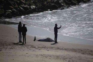 "Un delfín ""oscuro"" apareció muerto en una playa de Mar del Plata"