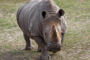 Con la muerte de la rinoceronte Imam queda extinta la especie en Malasia