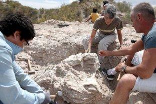 Hallan restos fósiles de un Titanosaurio de 85 millones de años en Neuquén