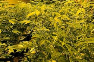 Absuelven a dos hombres que practicaban el autocultivo de cannabis con fines medicinales