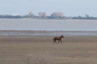 Pronostican que en diciembre el río Paraná continuará bajando en Santa Fe