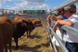 El ganado pisa fuerte en Expoagro