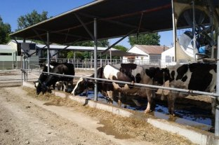 Un alivio para las vacas con impacto productivo