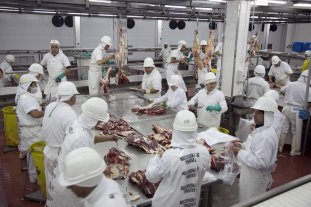 Las exportaciones de carne bovina superaron los 300 millones de dólares