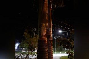 Dicen haber visto una virgen en una palmera
