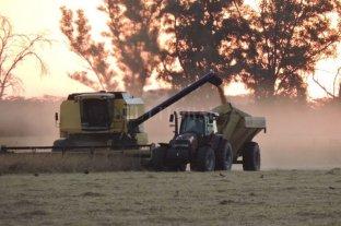 Los productores argentinos piensan mantener su apuesta productiva a pesar de las malas expectativas