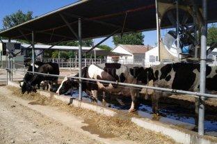 Bienestar animal: Senasa estableció una serie de exigencias