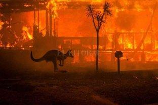 Más de 480 millones de animales murieron en los incendios en Australia