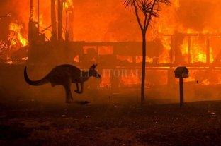Incendios en Australia: la situación es desesperante