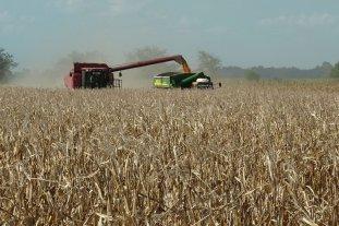 Zona núcleo: en 2019 alcanzó el récord histórico de producción de granos