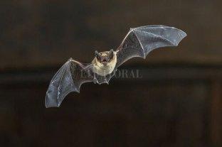 Se registraron dos casos de murciélagos con rabia en la zona