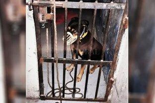 Detuvieron a un perro por morder a un policía en Cipolletti