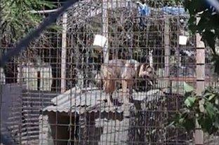 Piden la liberación de los perros detenidos por el caso Diego Román