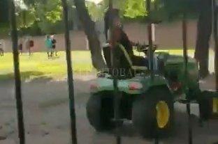 """Video: """"La Mona"""" Jiménez manejaba un tractor y se chocó un arbol"""