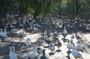 Casi 800 animales del ex Zoo de Mendoza ya fueron derivados a nuevos hogares