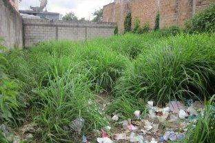 Dengue: Paraguay busca multar a los dueños de baldíos
