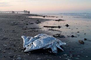 La falta de alimento y la contaminación fueron las principales amenazas de la fauna marina