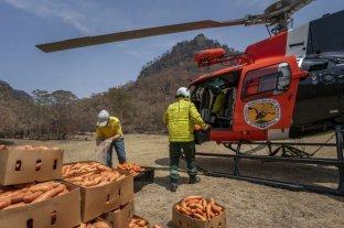 Lanzan desde el aire alimento para animales afectados por los incendios en Australia