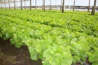 Poscosecha de verduras frescas: cómo hacer para estirar la vida útil
