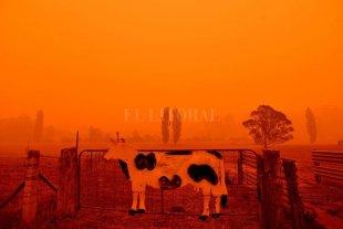 """Incendios en Australia, un """"cisne negro"""" para el comercio mundial de carnes"""
