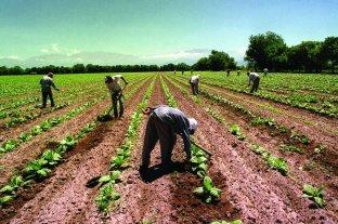 Otorgarán en forma provisoria la Libreta de Trabajo Rural a peones indocumentados