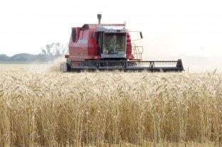 La cosecha de trigo finalizó con un récord de 19,5 millones de toneladas