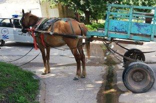 Robó en una rotisería y huyó en un carro tirado por caballos