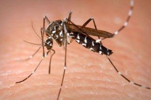Confirman el primer caso de dengue en la ciudad