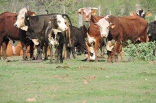 """El crecimiento deberá esperar, la ganadería está en """"modo subsistencia"""""""